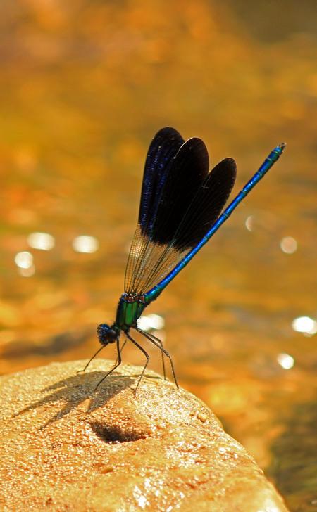 libelle.jpg - libelle - foto door misskell op 26-08-2013 - deze foto bevat: libelle, natuur, insect