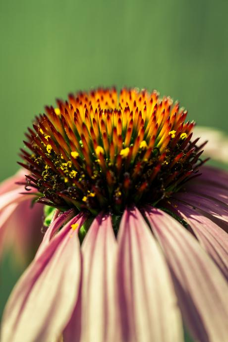 Zomaar een plantje, in kleur