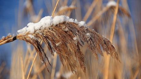 Zonnige winterdag