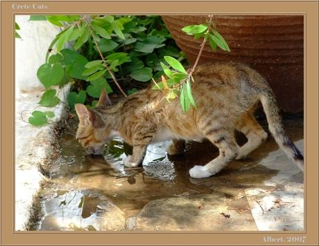 Katten op Kreta 1