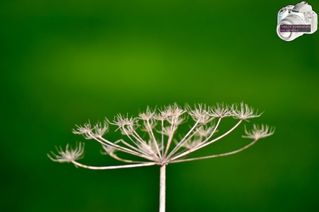 NaturesSymmetrics_byJoelle - - - foto door joelle2talkonly op 27-10-2014 - deze foto bevat: groen, macro, bloem, natuur, herfst, blad, nederland