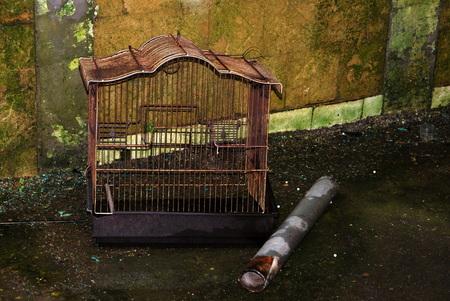 Cheratte forgotten birdcage - Lege vogelkooi in verlaten kolenmijn in Cheratte, Belgie - foto door wpbakkerfotografie op 26-02-2015 - deze foto bevat: oud, donker, kleur, stilleven, kunst, urban, verlaten, details, urbex, urban exploring