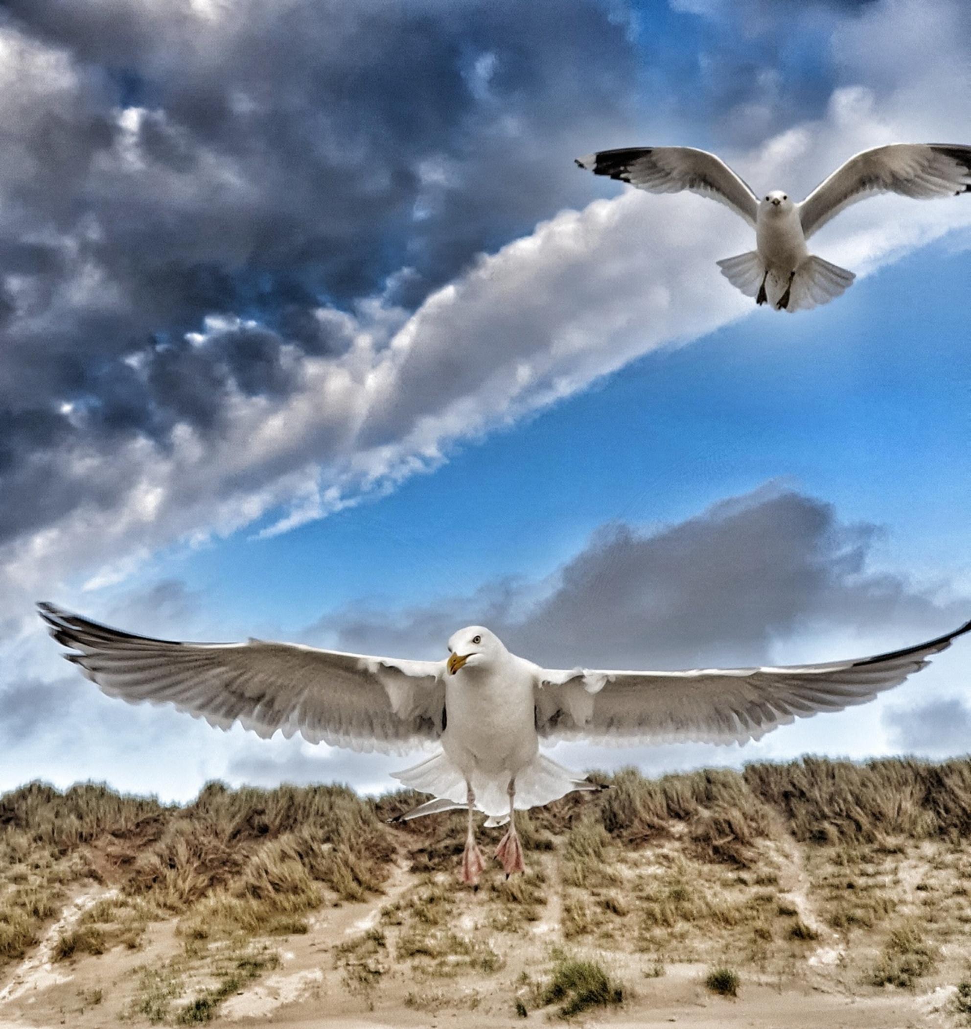 Prachtige gedramatiseerde foto van meeuwen - Prachtige shot van meeuwen op het strand. - foto door Travelling-elke op 03-03-2021 - deze foto bevat: lucht, wolken, strand, natuur, landschap, duinen - Deze foto mag gebruikt worden in een Zoom.nl publicatie
