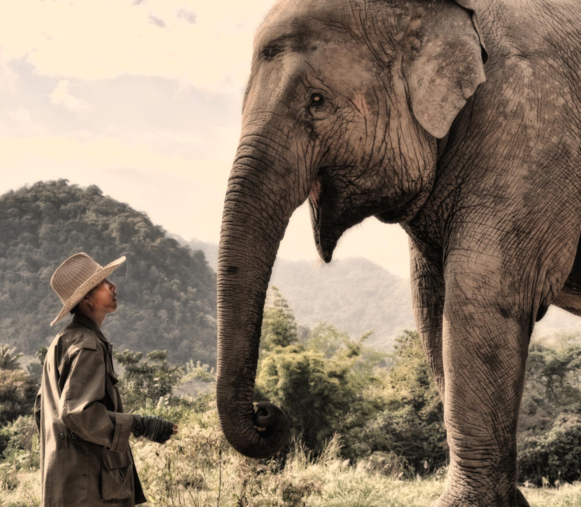 The approach - De mahout benadert 'zijn' olifant - foto door laurenskobus op 13-01-2012 - deze foto bevat: olifant, mahout - Deze foto mag gebruikt worden in een Zoom.nl publicatie