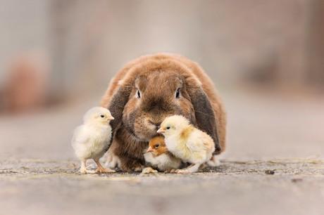 Vrolijk Pasen...