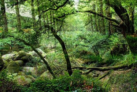 zomer in het bos