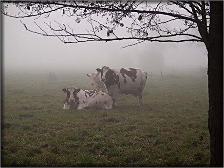 In de mist.