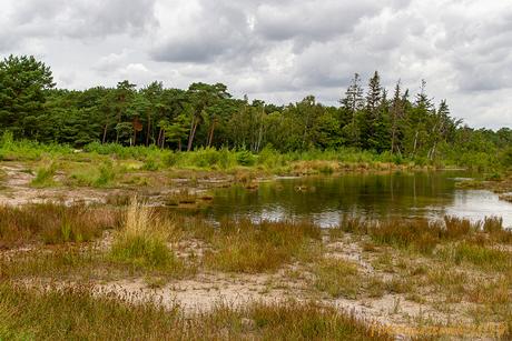 Brunssummerheide-rodebeek