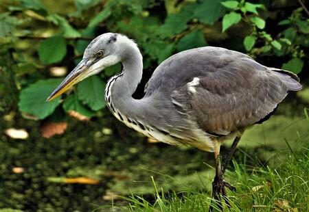 Focus - - - foto door ErikSFotografie op 03-03-2021 - deze foto bevat: water, natuur, dieren, vogel, reiger, watervogel, wildlife, blauwereiger
