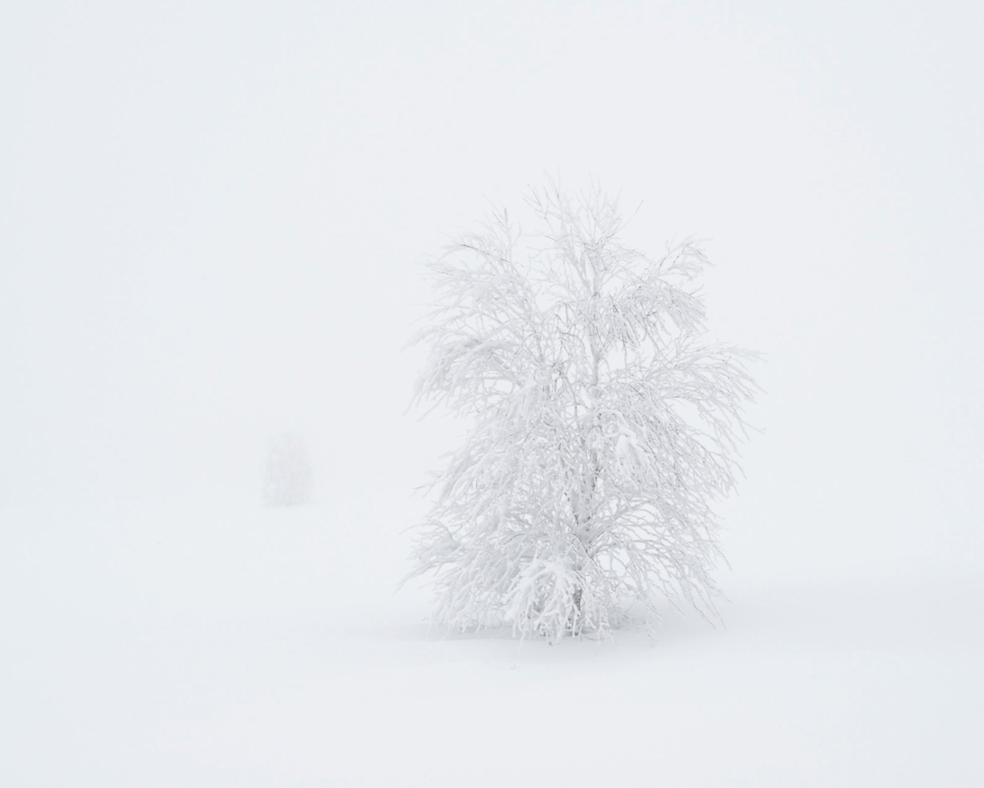 Simply White - Een (bijna) eenzaam boompje in een besneeuwd landschap. Mist en sneeuw, in mijn ogen een perfecte combinatie voor heerlijke minimalistische landschap - foto door weimaraan op 10-01-2021 - deze foto bevat: abstract, natuur, licht, sneeuw, winter, landschap, mist, bos, bomen, takken, koud, leegte, bevroren, eenzaamheid, boompje - Deze foto mag gebruikt worden in een Zoom.nl publicatie