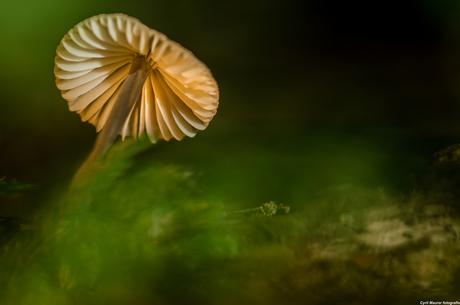 Green Mist with a Mushroom