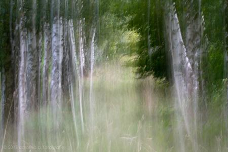 Project I(nspiratie), Mist - Op de valreep. Toch nog een mistfoto. Tenminste, het is een bewust verticaal bewogen foto en ik heb met een NIK filter nog een heel dun laagje mist o - foto door brinkbeest op 30-09-2013 - deze foto bevat: landschap, mist, bewogen, project I, project inspiratie