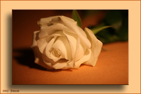 Flower of light (kader)