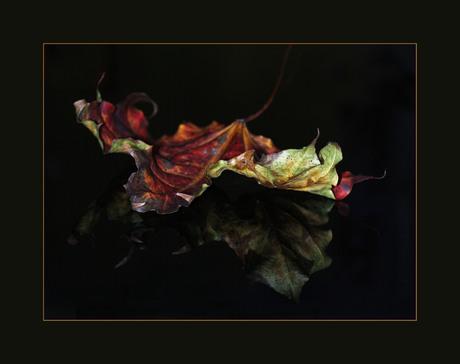 Herfstblad op acrylplaat