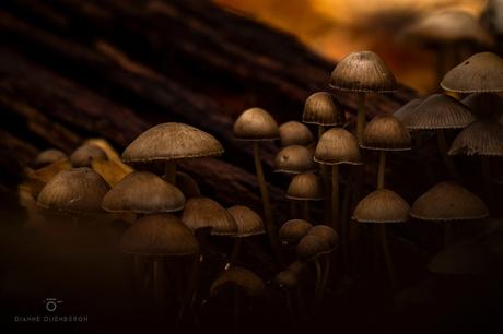 Fungi...