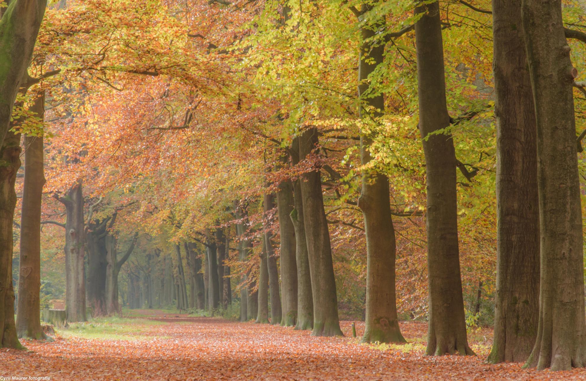De Herfst in zijn kleur en pracht - Ik kan er geen genoeg van krijgen de mooie herfst kleuren;). nog een of twee weken en de bomen zijn weer kaal voor het grootste gedeelte . Bij mij in - foto door sipmaurer op 31-10-2015 - deze foto bevat: bladeren, natuur, licht, herfst, landschap, bos, bomen, kleurijk, Licht inval - Deze foto mag gebruikt worden in een Zoom.nl publicatie