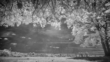 A sunny day - De wereld ziet er in infrarood altijd net even anders uit. Je weet dan ook nooit helemaal zeker met welke foto's je thuis gaat komen... - foto door meneerlex op 09-06-2020 - deze foto bevat: wolken, zon, landschap, bos, tegenlicht, bomen, limburg, zwartwit, mookerheide, infrarood, lange sluitertijd