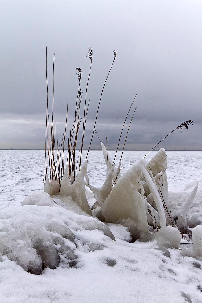 Winterlandschap bij Marken - Een stilleven van bevroren riet bij het Markermeer. - foto door Maragmar op 14-02-2012 - deze foto bevat: wit, sneeuw, winter, ijs, riet, marken, koud, holland, bevroren, februari