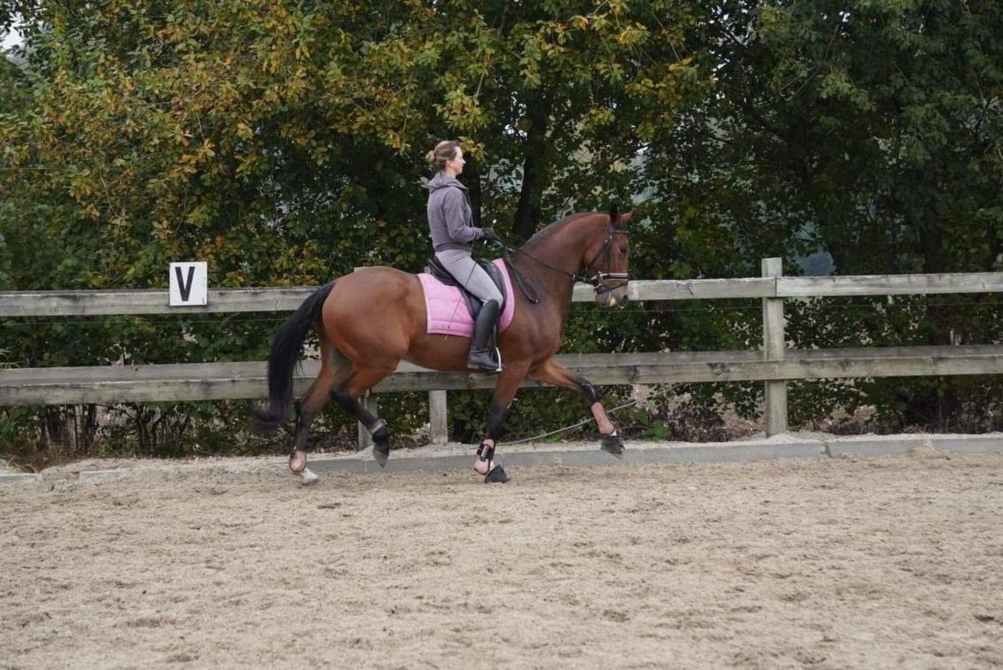 Naïrobi en Lynne - Sony Alpha 6000 55-210mm - foto door Yvad85 op 21-10-2020 - deze foto bevat: paard, dressuur, paardensport