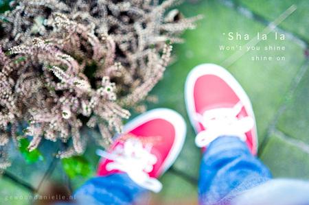 Sha la la - Ik heb de neiging om foto's te maken van nieuwe schoenen, zeker als het mooi weer. Dus hier is er weer eentje :D  Nikkor 85mm f1.8  Meningen welk - foto door mycreativity op 20-03-2011 - deze foto bevat: rood, kleur, natuur, plantje, schoenen, compositie, color, onscherp, danielle, scherpte, nikkor, balance, vans, van eerden, gewoondanielle.nl, 85mm f1.8