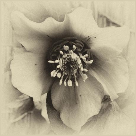 Flowers in Monochrome -1-
