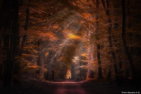 Herfst in het bospad
