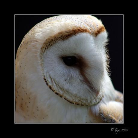Up-close, owl