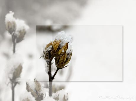 Winter Wonderland 1!!