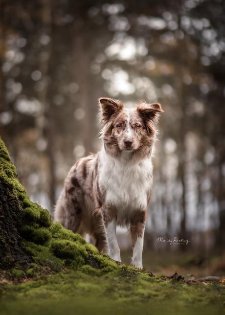Faya in het bos