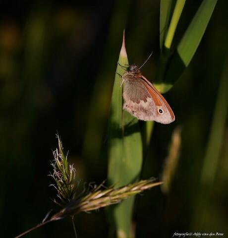 Vlinder op nachtplekje