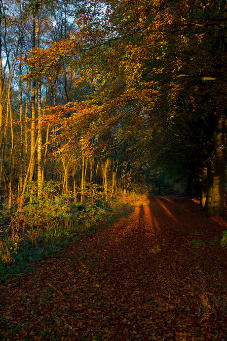 -Licht-gaat-aan-in-het-bos