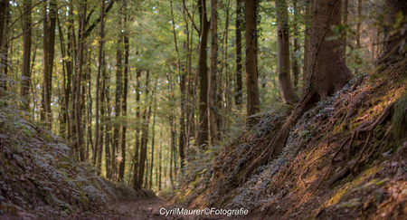 Woods - Dag beste Zoomers ik ben weer terug van weg geweest . deze foto was tijdens mijn moutenbike vakantie in zuidlinburg - foto door sipmaurer op 29-09-2016 - deze foto bevat: natuur, licht, vakantie, landschap, bomen, heuvels, Zuid Limburg, laag standpunt, zachte sfeer