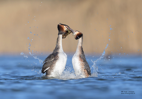 Pinguïndans Futen