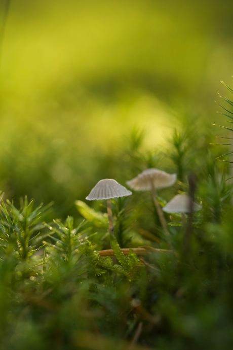 Herfst paddenstoeltjes zoeken de zon op.