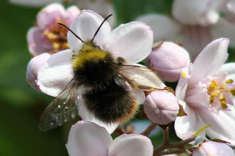 Beestenbaan