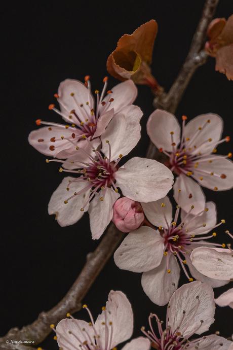 In bloei 2