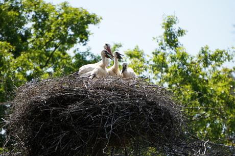 Met de kroost in het nest