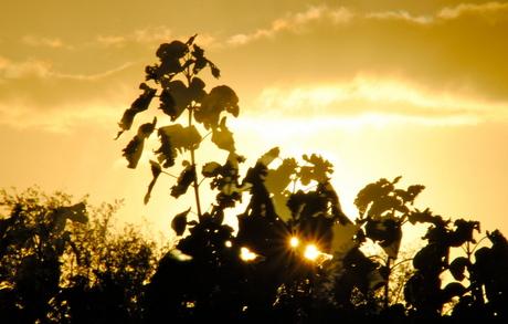 Laatste zonnestralen