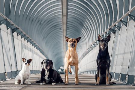 Iets anders proberen.. - - - foto door MarleenVerheulFotografie op 03-08-2020 - deze foto bevat: dieren, huisdier, hond, hondenfotografie, hondenfotograaf