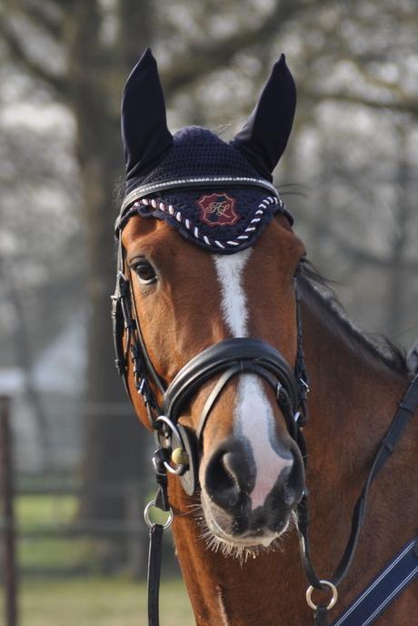 julius de lieve pony