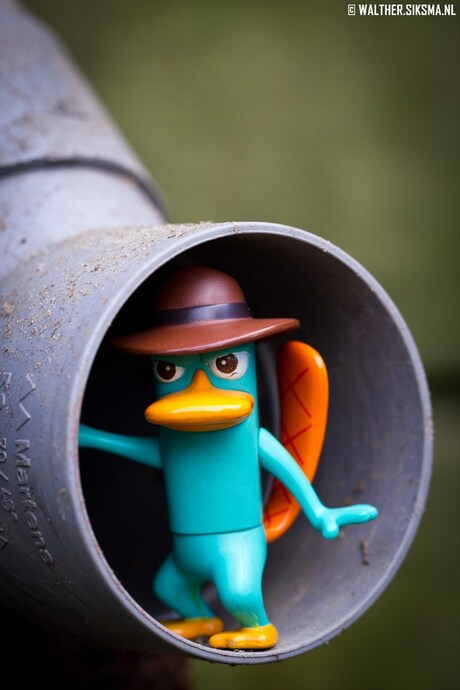 Agent P, on it's way to another mission