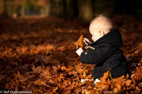 Falling Leaves_Autumn 2015