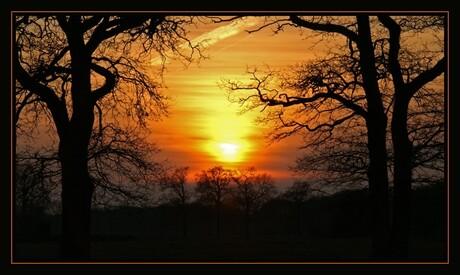 Bomen met ondergaande zon