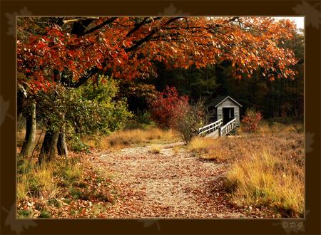 """Autumn Flavour '07 - Gemaakt in """"De Oldemeyer"""" bij Hardenberg. - foto door daniel44 op 23-10-2007 - deze foto bevat: kleuren, autumn, natuur, herfst, blad, bos, daniel44"""