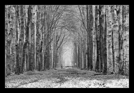 Lange bomen laan
