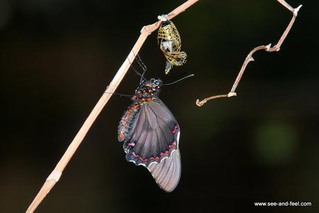 Butterfly-1-