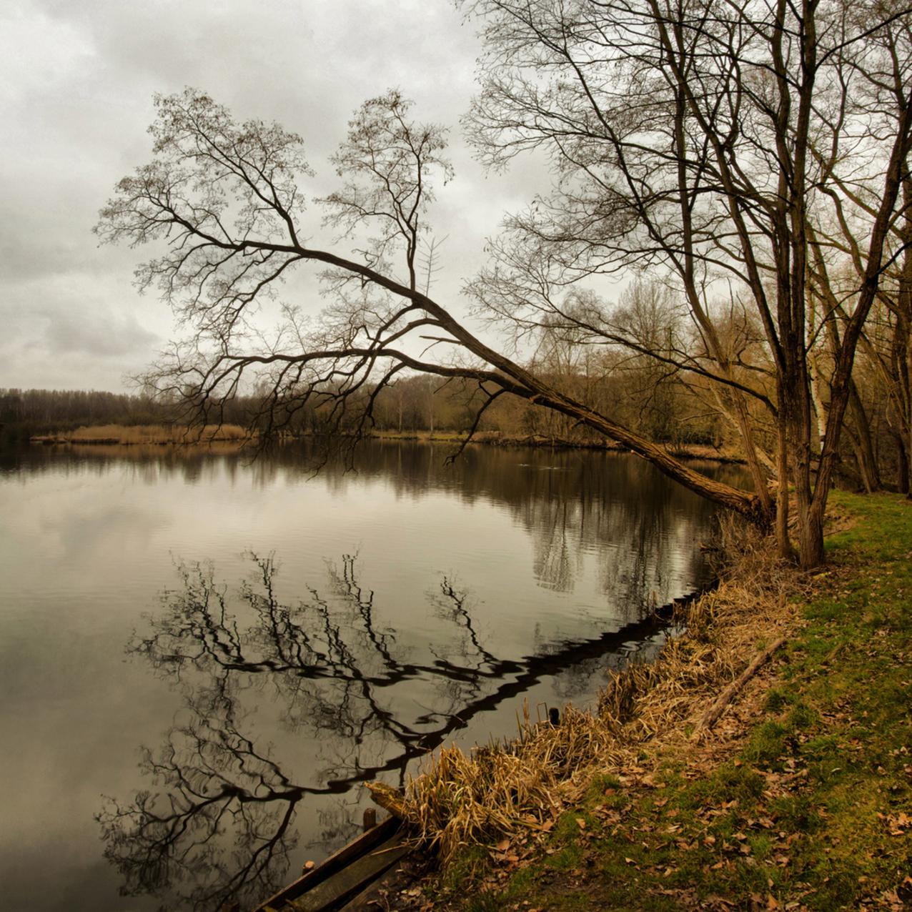 Natuurgebied De Maat - Samengesteld beeld uit twee boven elkaar geplaatste horizontale fotos. - foto door kosmopol op 21-03-2012 - deze foto bevat: water, natuur, spiegeling, kosmopol