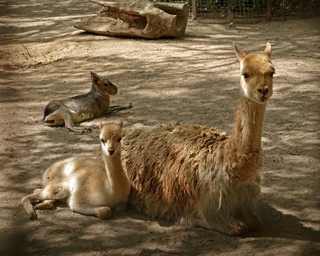 Moeder en kind - Gewoon gezellig. gr. Nel - foto door Nel Hoetmer op 09-07-2014 - deze foto bevat: dieren, artis, nel