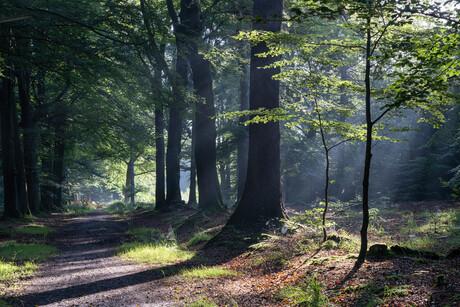 Ochtend in het bos, herfst begint langzaam te komen