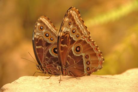 Vlinder in mn buik van jou...